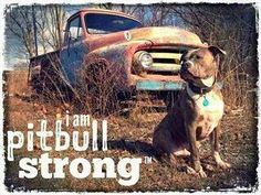 Pit bull strong