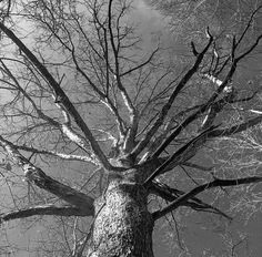 "#iphone6sphotography #bw #igdaily #tree #tree_captures #treeporn #tree by tadpole_t Follow ""DIY iPhone 6/ 6S Cases/ Covers/ Sleeves"" board on @cutephonecases http://ift.tt/1OCqEuZ to see more ways to add text add #Photography #Photographer #Photo #Photos #Picture #Pictures #Camera #Only #Pic #Pics to #iPhone6S Case/ Cover/ Sleeve"
