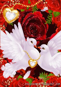 Peace And Love Brianna Cute Wallpaper Backgrounds, Flower Backgrounds, Love Wallpaper, Cute Wallpapers, Beautiful Love Pictures, Love You Images, Beautiful Gif, Dove Images, Dove Pictures