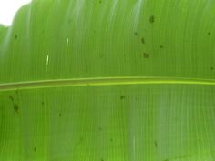 Details do count. #Banana leaf# Gorgeous by MW