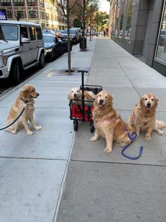 Golden Girls out on the town : goldenretrievers Cute Funny Animals, Cute Baby Animals, Funny Dogs, Animals And Pets, Cute Cats And Dogs, I Love Dogs, Beautiful Dogs, Animals Beautiful, Cute Puppies