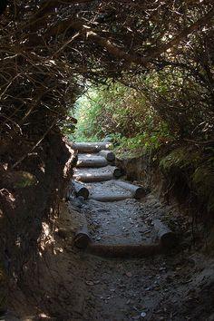 One of my favorite secret placesHobbit Trail - Florence, Oregon. One of my favorite secret places Oregon Vacation, Oregon Road Trip, Oregon Trail, Oregon Coast, Vacation Spots, Oregon Hiking, Oregon Usa, Viaje A Oregon, Places To Travel