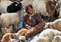 «Шерстяной бриллиант», «мягкое золото Азии», «королевская пряжа», «драгоценная нить» - эпитеты для пашмины. И начинает она свой путь здесь - деревня Корзок, провинция Ладакх штат Джамму и Кашмир (Транс-Гималаи)