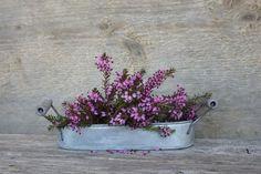 Winterharte Balkonpflanzen | Schöner Wohnen Gypsophila, Plants, Instagram, Babys, Gardening, Backyard Patio, Homes, Autumn, Tips