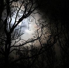 moonlight | Flickr - Photo Sharing!