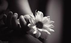 black+and.white+photographs   black-and-white-flower-photography-pretty-Favim.com-175985_large.jpg