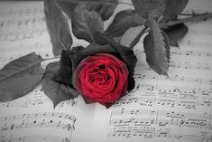 Photo by Erzsó Danicskóné Flora, Rose, Music, Plants, Musica, Pink, Musik, Muziek, Plant