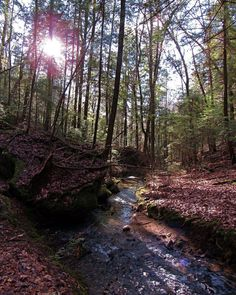 "Sam Calhoun on Instagram: ""The never ending natural beauty of Bankhead National Forest, AL.  #explore #getoutstayout  #optoutside #getoutide #travelblogger #travel…"""