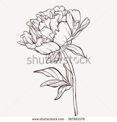 stock-vector-vector-peony-flower-isolated-on-white-background-element-for-design-hand-drawn-contour-lines-and-367663178.jpg (450×470)