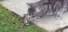 Tom & Jerry? LOL