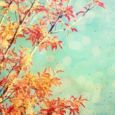 Nature photography - orange leaves wall art - autumn photography  - aqua teal decor - colorful tree nursery decor 8x8 - Tangerine Dream