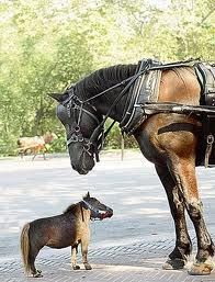 miniture pets, any size horse in lovable.