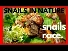 WILD SNAILS IN NATURE & SNAILS RACE - 2019 - BEAUTIFUL SNAILS IN ACTION - YouTube Garden Snail, Snails In Garden, Habitats, Action, Racing, Snow, Nature, Youtube, Beautiful