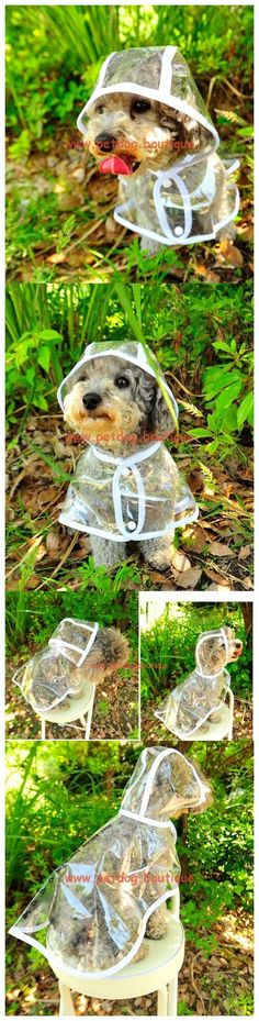 Small Dogs Clothes and Accessories Rain Coat Color: colorless Size Back Length Chest (Most Important) Neck XS 8.5″ 9-11″ 9.5″ S 10″ 11-12.5″ 11.5″ M 11.5″ 12.5-