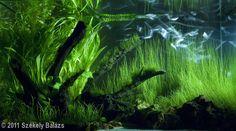 2011 AGA Aquascaping Contest - Entry #67