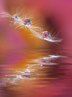 ~~Reflection | water drop and water reflection macro | by Marilena Fattore~~