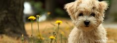 cute hairy puppy eyes stunning facebook timeline profile covers. cool yellow flowers fb timeline profile banner cool fb cover cute puppy