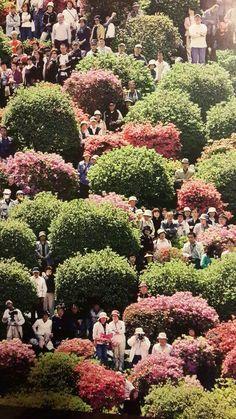 Azalma gardens in Japan