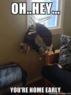 If I was a cat...