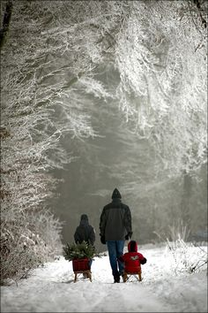 A family choosing a christmas tree from the forest.  I used to go to the woods with my daddy to do the same thing when I was a little girl.  Precious memories.