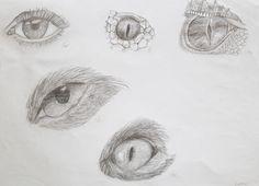 eye drawing study