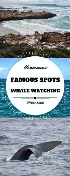 A famous spot for whale watching, Hermanus is a charming town on the Southern Coast of the Western Cape.