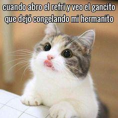 "100 Me gusta, 2 comentarios - Gatos Cool (@gatoscooloficial) en Instagram: "". . .. #memesdegatoscool #gatoscool😸 #gatos_cool @gansitomarinelausa #gancito"""