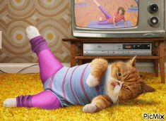The perfect Cat Exercise Workout Animated GIF for your conversation. Discover and Share the best GIFs on Tenor. Crazy Cat Lady, Crazy Cats, I Love Cats, Cute Cats, Funny Animals, Cute Animals, Animals Images, Cat Exercise, Funny Birthday Cards