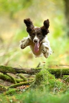 Country Living ~ Some days dogs just fly.