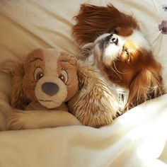 Cavalier cuties : Photo
