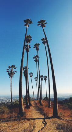 griffith observatory trails, los angeles, CA, USA @meshellg12