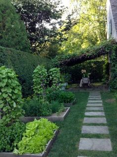 Raised beds with lettuces and herbs, leading to the grapevine pergola at Bee Cottage | Frances Schultz