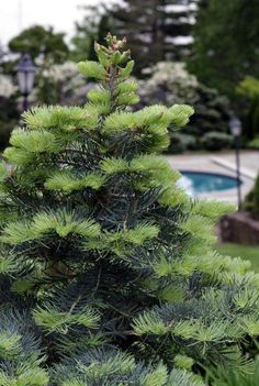 Your garden: do it now � perennials, flowers, trees, vegetables