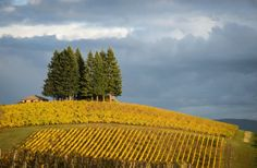 Wine Lover's Guide to the Willamette Valley
