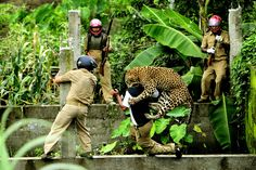 Man and Animal Conflict: A Leopard attacks a forest department employee, after the man threw a stone toward the leopard in an abandoned construction site in Limbu Village in Siliguri in West Bengal, India. (© Salil Bera/National Geographic Photo Contest)