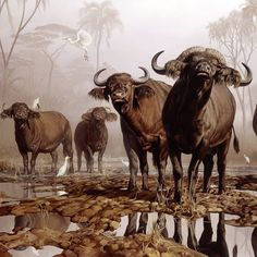 Cape Buffaloes. Detail of oil on canvas painting by Ian Coleman.