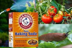 30 uses for baking soda in the garden - Baking soda plays a vital part of green cleaning and has many uses in the house, but also in the garden [LEARN MORE]