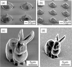 World's Tiniest Bunny the size of a Bacterium