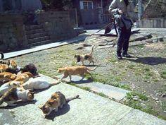江ノ島の猫達 Enoshima Island Cats (Kanagawa,Japan) - YouTube