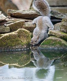 Gumby Squirrel elainejohnstonschuch                              …