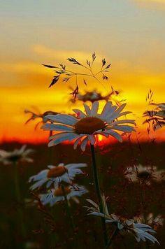 ༺⊱✿ #Sunrise #Sunset ✿⊱༻ ༺⊱✿ #Gündoğuşu ⊱ #Günbatışı ✿⊱༻ ༺⊱✿ #Gündoğumu ⊱ #Günbatımı ✿⊱༻
