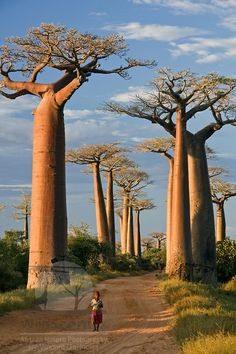 The Portfolio Galleries of Nature Photographer Vincent Grafhorst Baobab Tree, Rare Plants, Amazing Nature, The Good Place, Ocean, Island, Landscape, World, Gallery