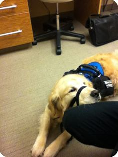 Psychiatric service dogs are specially trained to assist individuals with psychiatric disabilities; these dogs are most often placed with people struggling with depression. In order to qualify for a psychiatric service dog, the individual's condition must reach the clinical level, meaning the diagnosis must meet the criteria specified in the theDiagnostic and Statistical Manual (DSM-IV).