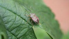 Insects, Garden, Animals, Garten, Animales, Animaux, Lawn And Garden, Gardens, Animal