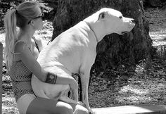 Gorgeous big lap dog- just like Blazmo. Lap Dogs, Dogs And Puppies, Doggies, Mans Best Friend, Girls Best Friend, I Love Dogs, Puppy Love, Nanny Dog, Pitt Bulls