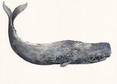 Ancient Sperm Whale - Original painting