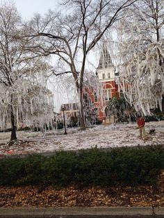 Auburn has more than two trees.