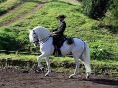 Lusitano horse Portugal