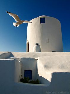 A windmill and a gull in Santorini island. What a great shot!