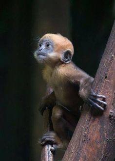 ANIMALS TIME : Monkey time (Hora del mono)